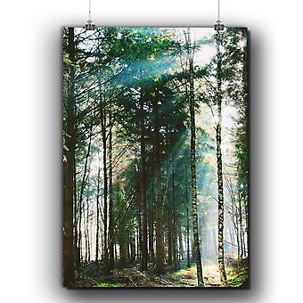 Matte or Glossy Poster with Forest Beautiful Nature | Wellcoda | *q251