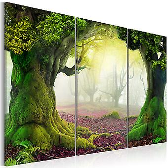 Canvas Print - Mysterious forest - triptych