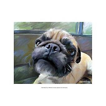 Walrus Pug Poster Print by Robert McClintock (19 x 13)