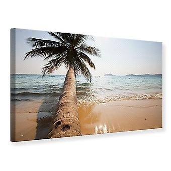 Canvas Print Palm