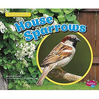 House Sparrows (Backyard Birds)