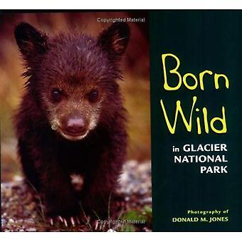Född vilda i Glacier National Park