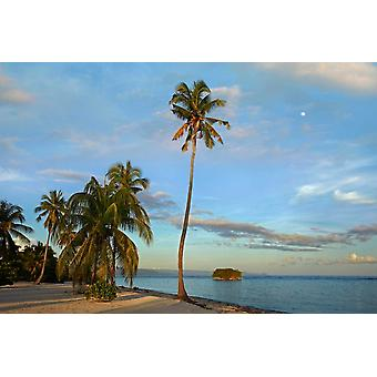 Coconut Palm trees on Pamilacan Island Philippines Poster Print by Tim Fitzharris