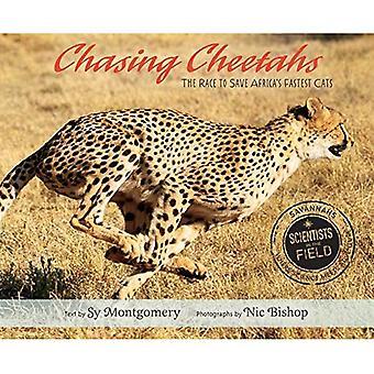 Jagter geparder: Kapløbet om at redde Afrika hurtigste katte (forskere i feltet)
