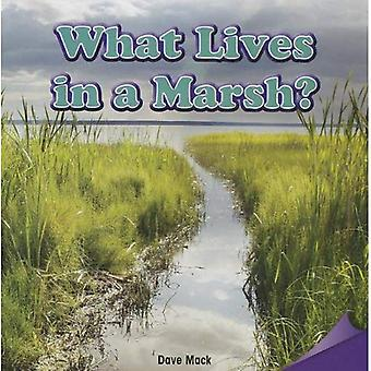 What Lives in a Marsh?