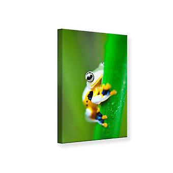 Canvas Print The Frog
