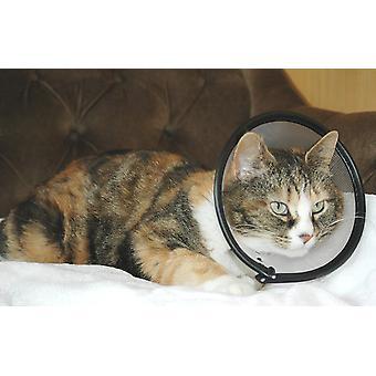 Azienda di animali gatto Smart Recovery collo, adatto per gatti