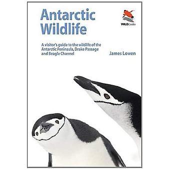 Vida selvagem da Antártica