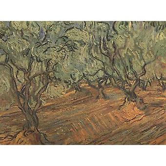 Olive Grove: the Bright Blue Sky, Vincent Van Gogh, 45.5 x 59.5 cm