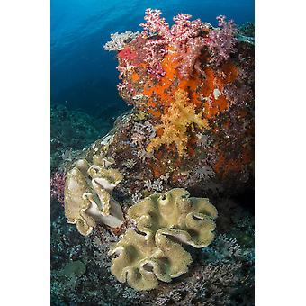 المشهد الشعاب المرجانية الملونة بالأصفر والأحمر ديندرونيفثيا والملفوف المرجان الناعم