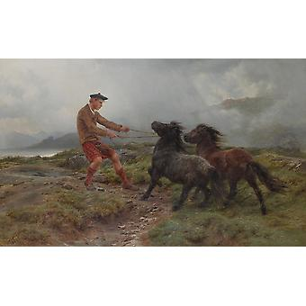 Rosa Bonheur - A Ghillie and two Shetland Poster Print Giclee