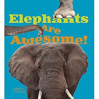 Elephants Are Awesome! (Awesome African Animals!)