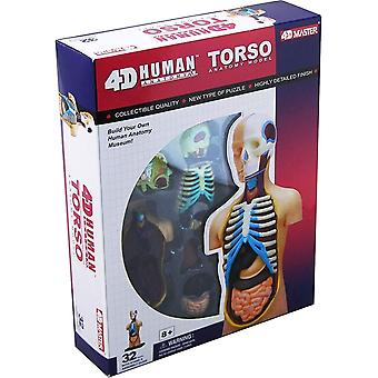 4D Vision Human Anatomy Torso Model