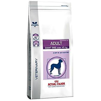 Royal Canin Adult Giant Dog (Dogs , Dog Food , Dry Food , Veterinary diet)