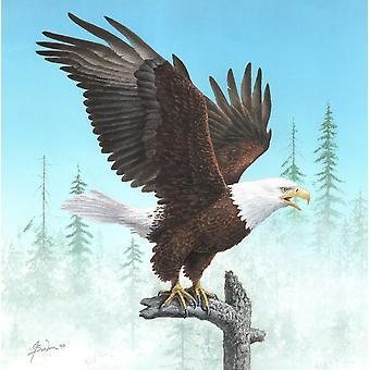 Bald eagle vise vinger plakat Print af John Bindon