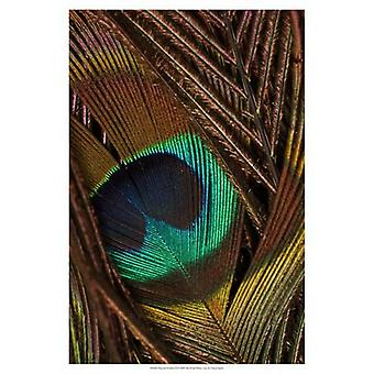 Peacock Feathers II Poster Print by Vision studio (13 x 19)