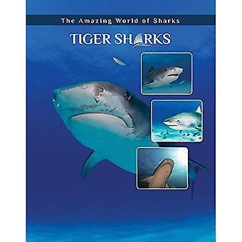 Tigerhaie (erstaunliche Welt der Haie)