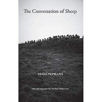 Conversazione delle pecore