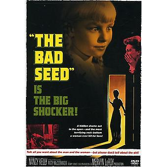 Bad Seed [DVD] USA import