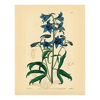 Botanical Series 473 Poster Print (8 x 10)