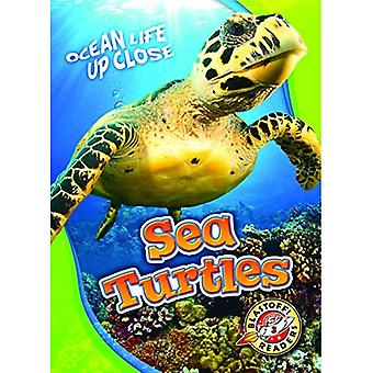 Sea Turtles (Ocean Life Up Close)