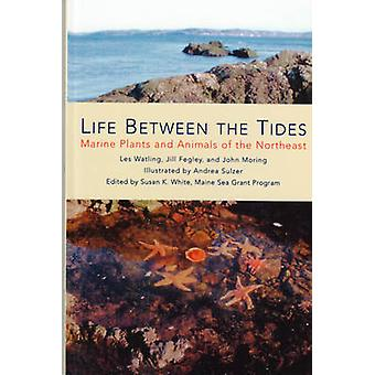 Life Between the Tides - Marine Plants and Animals of the Northeast by