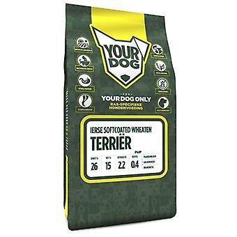 Yourdog Ierse Softcoated Wheaten TerriËr Pup 3 Kg