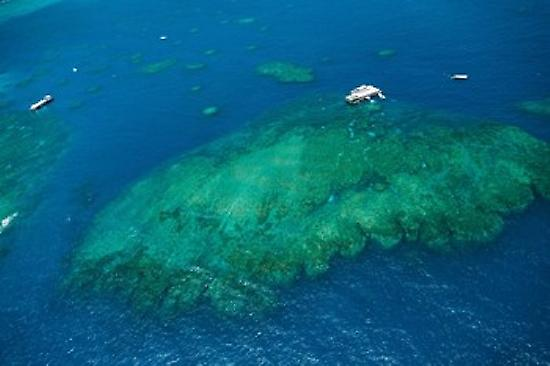 Aerial view of coral reef in the pacific ocean Great Barrier Reef Queensland Australia Poster Print by Panoramic Images (36 x 24)