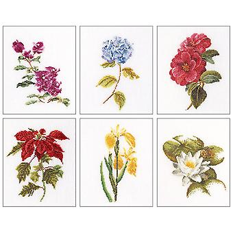 Floral Studies 7 On Aida Counted Cross Stitch Kit-6.75