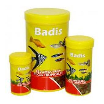 Badis Badis Tropical Water Scale (Fish , Ponds , Food , Warm Water , Food for Pond Fish)