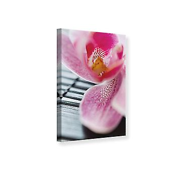 Canvas Print Close Up Orchid