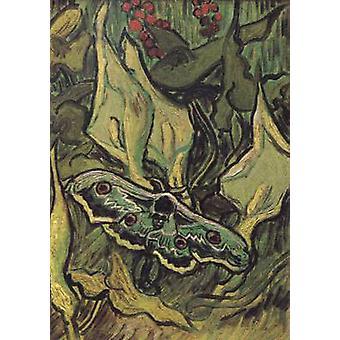 Pyrale des tête de mort, Vincent Van Gogh, 33,5 x 24,5 cm
