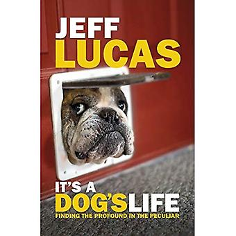 It's a Dog's Life: Finding the Profound in the Peculiar