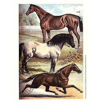 Johnsons Horse Breeds I Poster Print by Henry J Johnson (10 x 13)