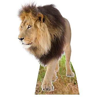 Lion - Lifesize karton gestanst / Standee