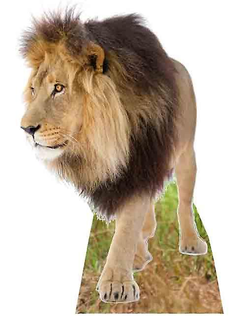 Lion - Lifesize kartong släppandet / stående