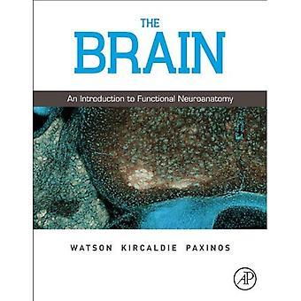El cerebro: Introducción a la Neuroanatomía funcional