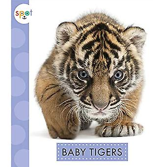Baby Tigers (Spot (Paperback))
