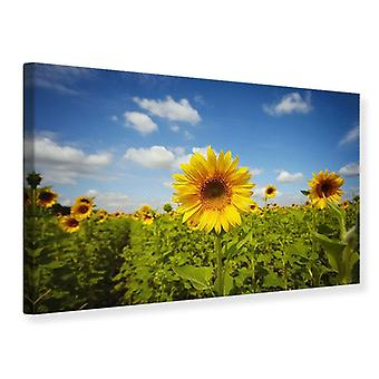 Canvas Print Summer Sunflowers