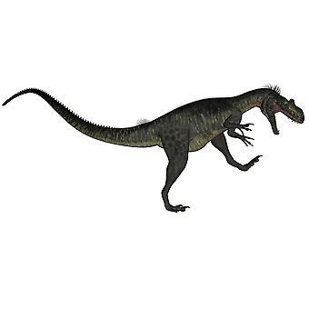 Динозавр Мегалозавр ревом белый фон Плакат Печать