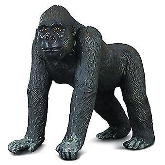 Collecta westlichen Gorilla