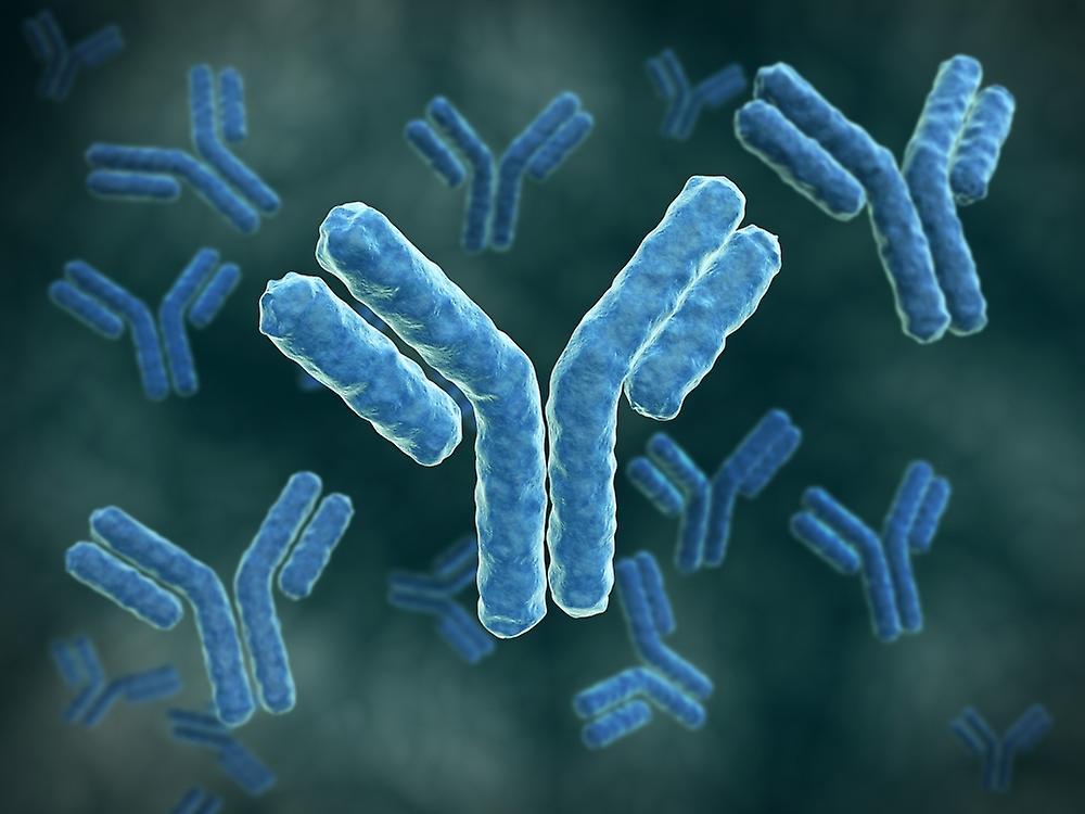 Антитела, вырабатываемые при попадании возбудителя сифилиса