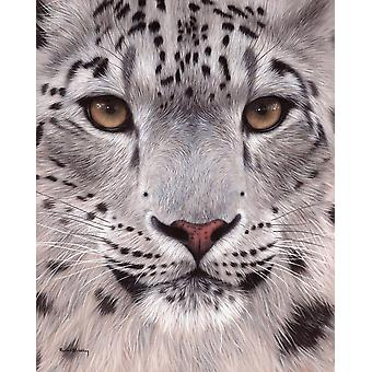 Snow Leopard Face Poster Print by Rachel Stribbling
