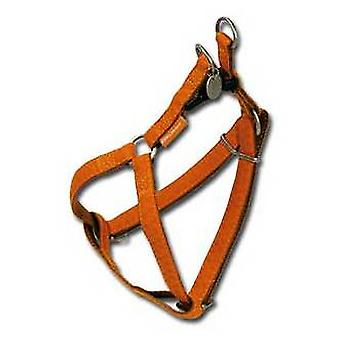 Nayeco MacLeather brown dog harness S (Dogs , Collars, Leads and Harnesses , Harnesses)