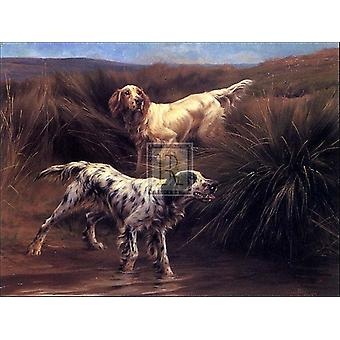 English Setters in a Marshland Poster Print by Thomas Blinks (30 x 24)