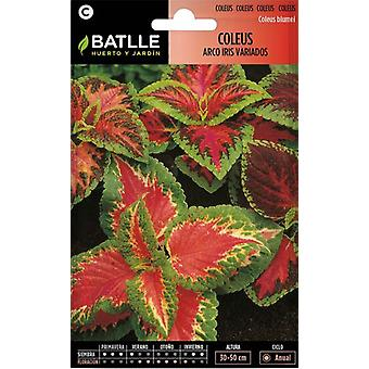 Batlle Rainbow Hybrid Coleus (Tuin , Tuinieren , Zaden)
