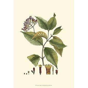 Crimson botaniska jag affisch Skriv av Hiersman (13 x 19)