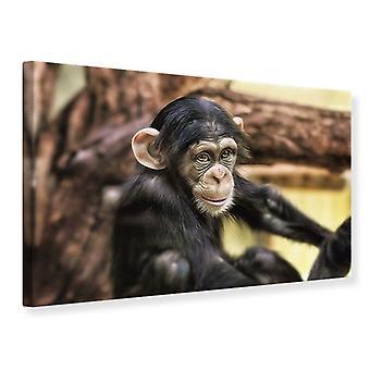 Lærred Udskriv chimpanse