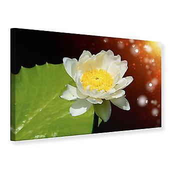 Canvas Print Water Lily In The Moonlight
