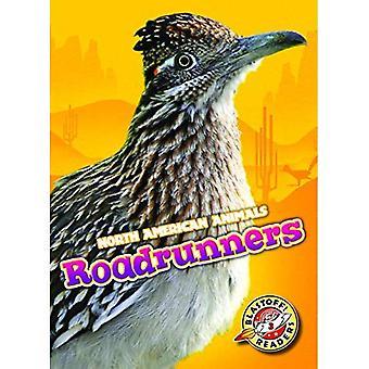 Roadrunners (North American Animals)